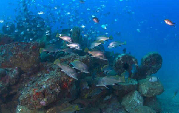 Atlantis 6